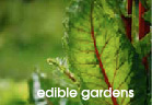 Aloe Design - Edible Gardens